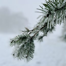 Winter hike-Wildewiese ❄⛄