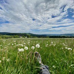 small meadow break