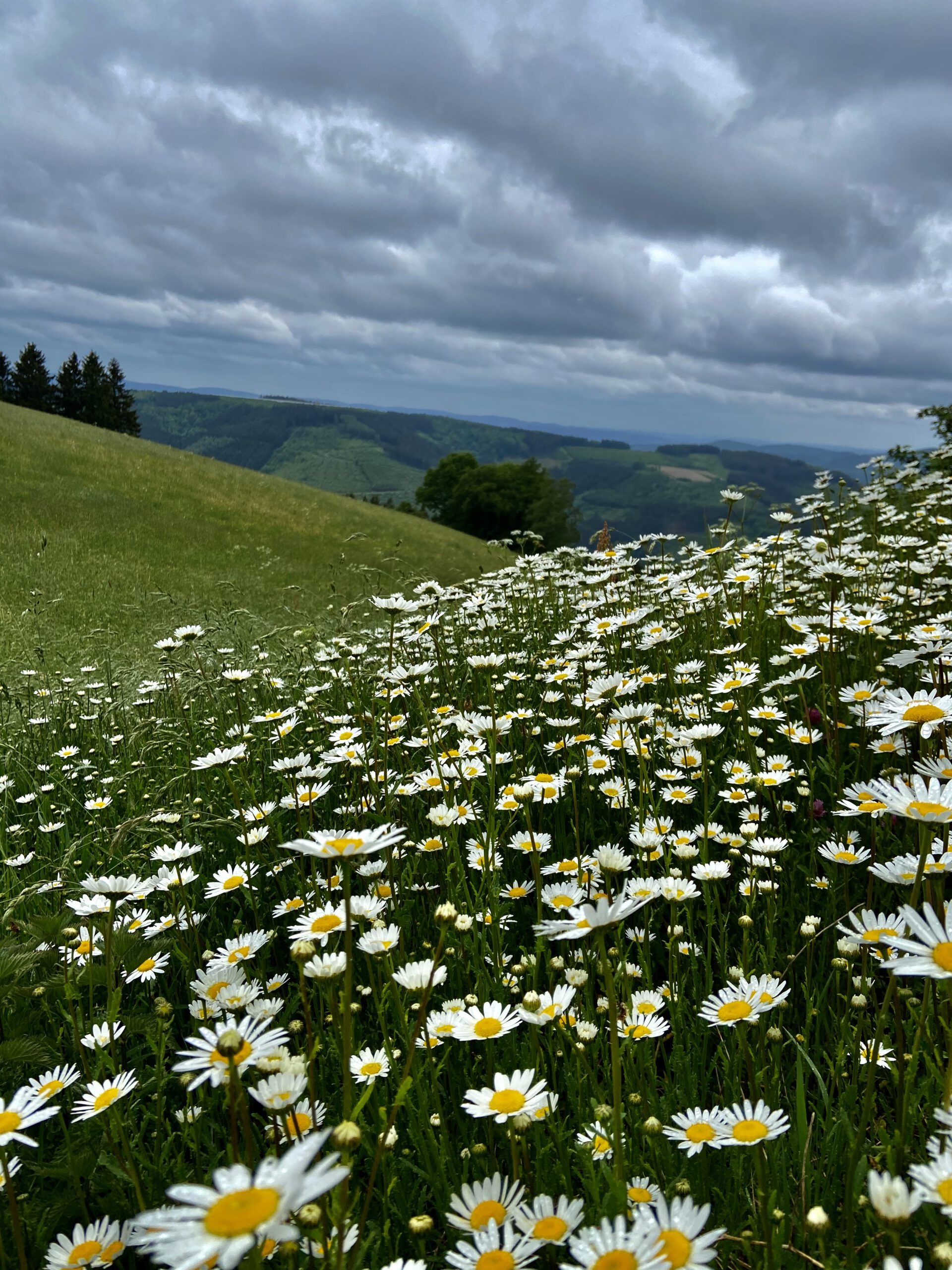 "Natural meadow ""Wildewiese"""