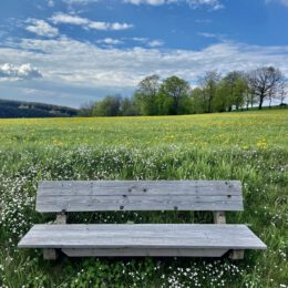 beautifully situated bench
